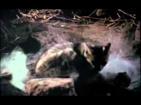 Bug (1975 film) Bug1975 YouTube