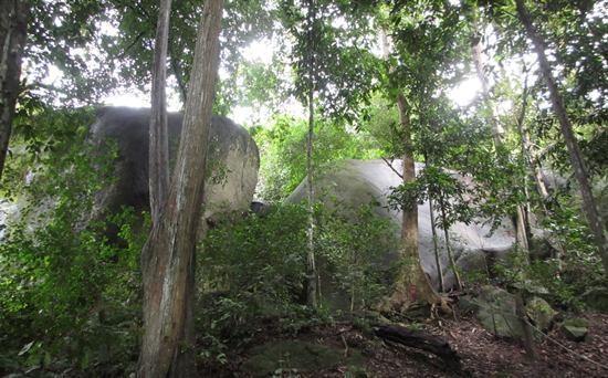 Bukit Batu Lebah Recreational Forest Bukit Batu Lebah Bee Hives Hill Melaka Cool