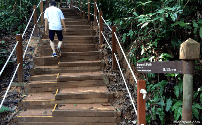 Bukit Timah Hill Bukit Timah Hill Summit Journey to the Top Little Day Out