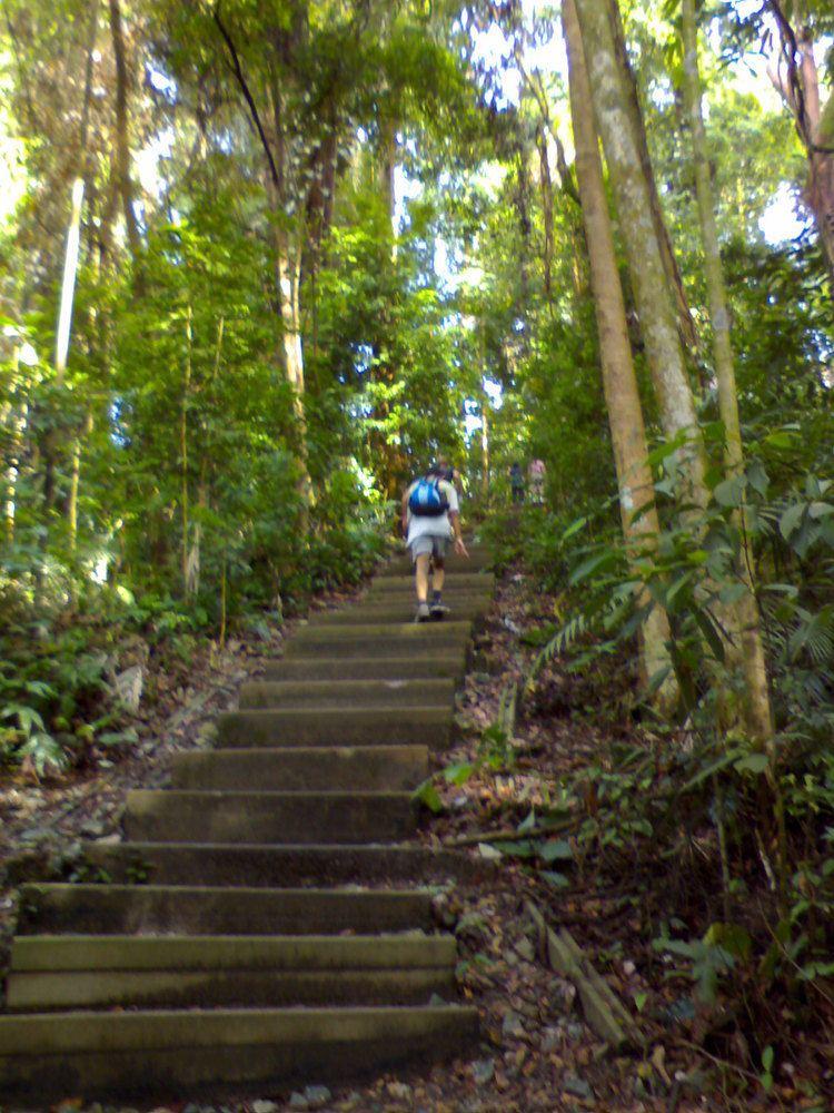 Bukit Timah Hill Bukit Timah Nature Reserve Wikipedia