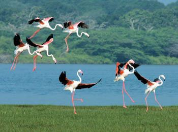 Bundala National Park Bundala National Park Holidays in Sri Lanka Tour Packages