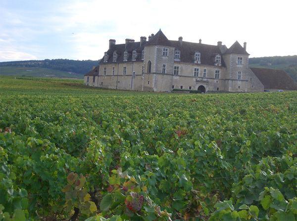 Burgundy Culture of Burgundy
