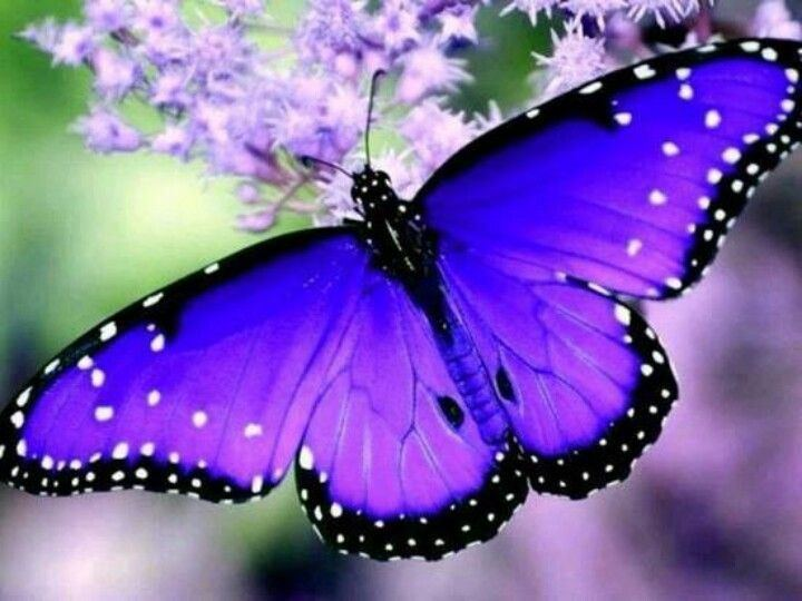 Butterfly 1000 ideas about Butterflies on Pinterest Moth Tropical fish and