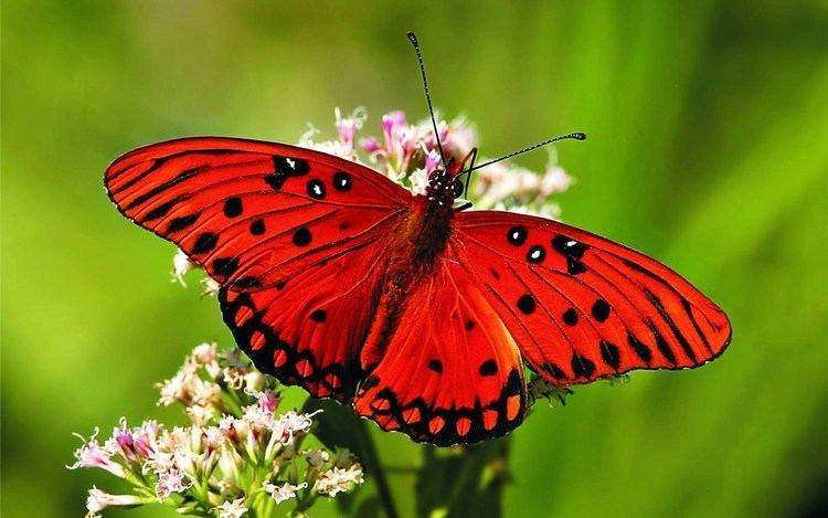 Butterfly Butterfly My animal friends Animals Documentary Kids