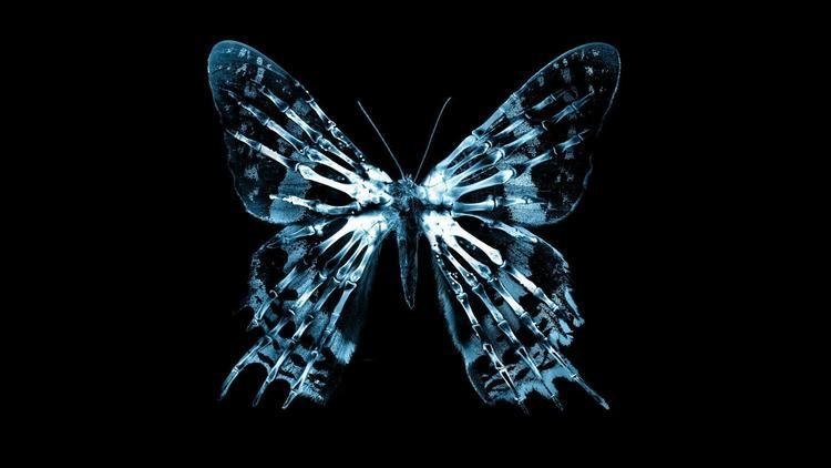 Butterfly effect What Is Your Butterfly Effect Playbuzz