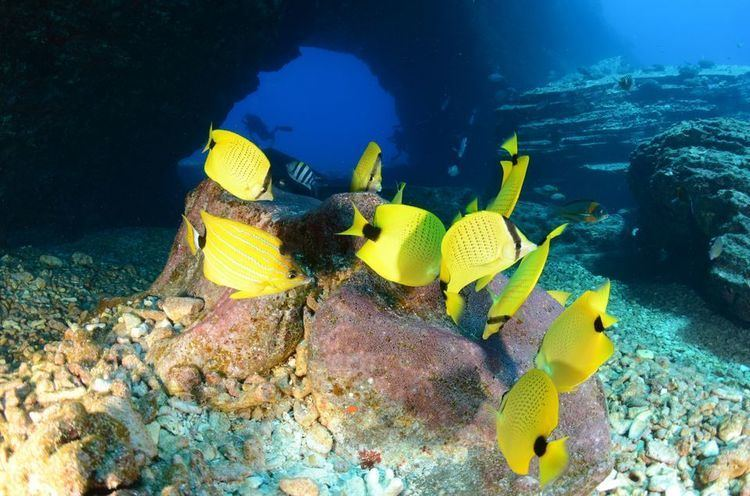 Butterflyfish Butterflyfish Butterflyfish Pictures Butterfly Fish Facts