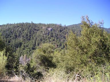 California chaparral and woodlands California montane chaparral and woodlands