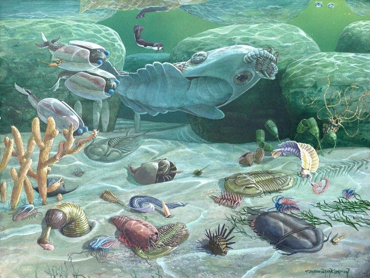 Cambrian 1000 images about deep time cambrian on Pinterest