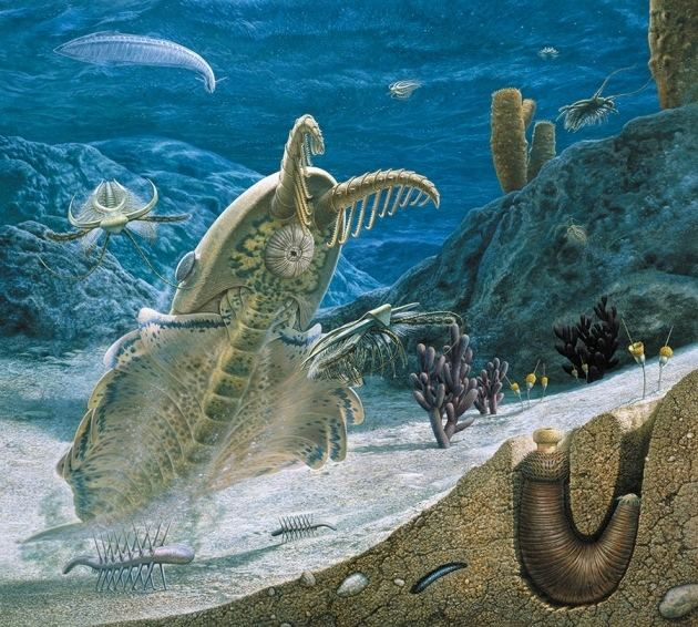 Cambrian wwwnaturecompolopolyfs7340971455557253ima