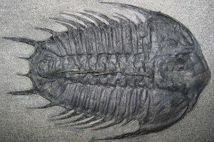 Cambrian Cambrian Period amp Cambrian Explosion Facts amp Information