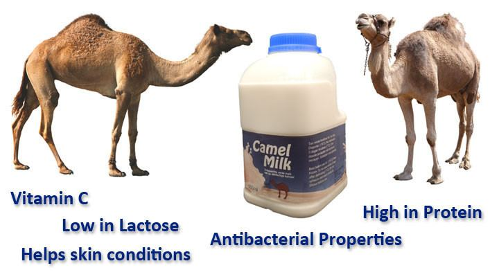 Camel milk UK Camel Milk