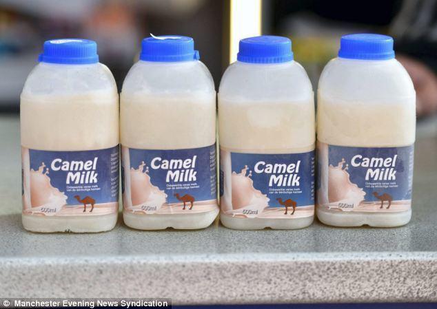 Camel milk Corner shop starts selling frozen CAMEL MILK for 6 a pin Daily
