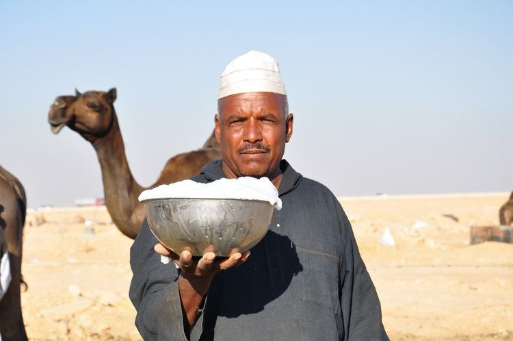 Camel milk Is drinking camel milk good for you