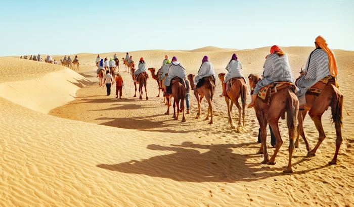 Camel Safari Camel Safari Day Tour Bikaner India Bikaner Camel Safari Day Tour