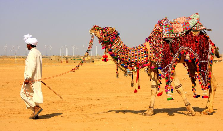 Camel Safari Camel Safari Packages Adventure Nation
