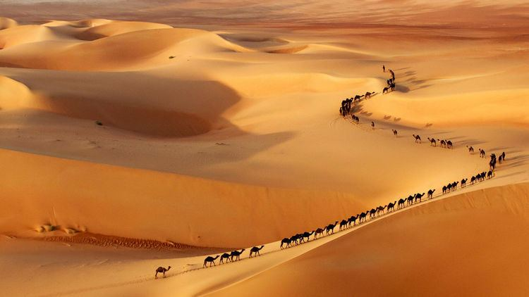 Camel train Camel Train Toils and Troubles in Xinjiang Province