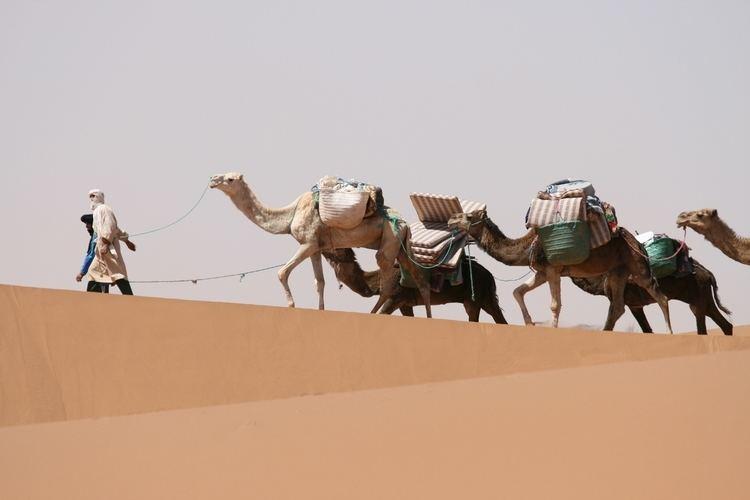 Camel train Camel Train Sahara RicPar Richard Parkes