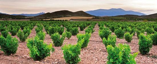 Campo de Borja (DO) La GarnachaCampo de Borja wine route in Spain Wine Routes in