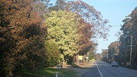 Campvale, New South Wales httpsuploadwikimediaorgwikipediacommonsthu