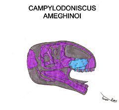 Campylodoniscus httpsuploadwikimediaorgwikipediacommonsthu