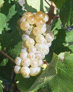 Canberra District wine region httpsuploadwikimediaorgwikipediacommonsthu