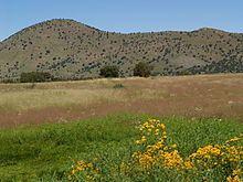 Canelo Hills httpsuploadwikimediaorgwikipediacommonsthu
