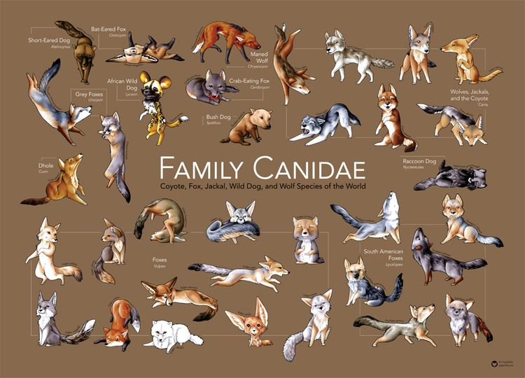 Canidae Canidae by Snowsilver on DeviantArt