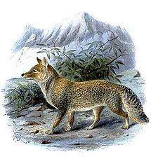 Caninae httpsuploadwikimediaorgwikipediacommonsthu
