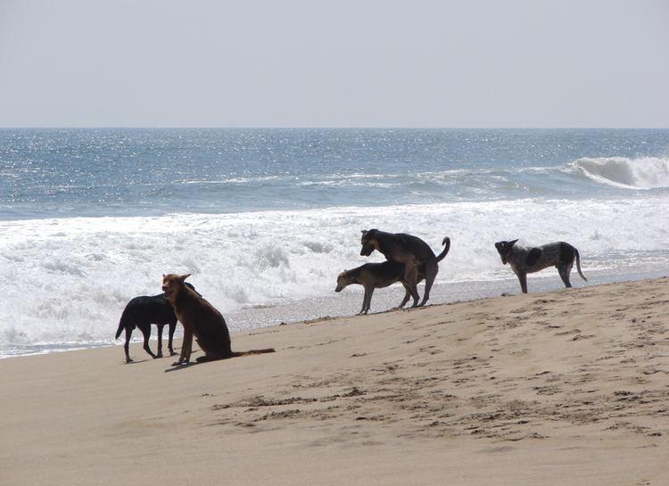 Canine reproduction hounddogsdrulecomwpcontentuploads201108Cani