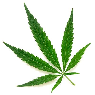 Cannabis (drug) Cannabis Licensing Authority