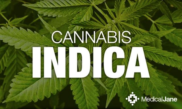 Cannabis indica About Cannabis Indica Medical Marijuana 101 Overview