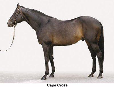 Cape Cross (horse) wwwvirtualformguidecomphotosstallionscapecros