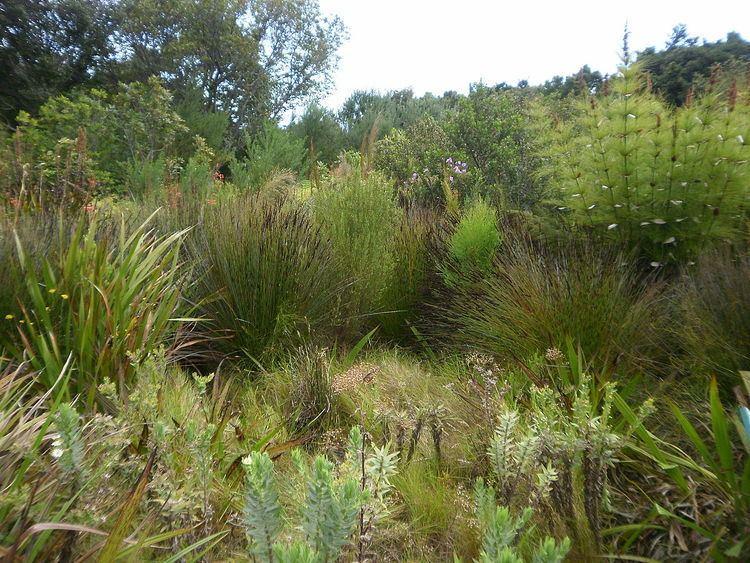 Cape Lowland Freshwater Wetland