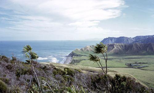 Cape Runaway wwwtearagovtnzfilesp5751enzjpg