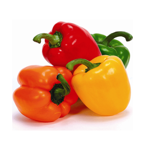 Capsicum Capsicum Bell PepperPaprikaBeautifully shapedglossy and crunchy