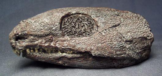 Captorhinus Captorhinus