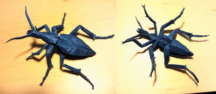 Carabus blaptoides Carabus blaptoides Designed and folded by me Made from pa Flickr