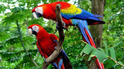 Carara National Park httpsatravelassetscommediavaultlemediaa9