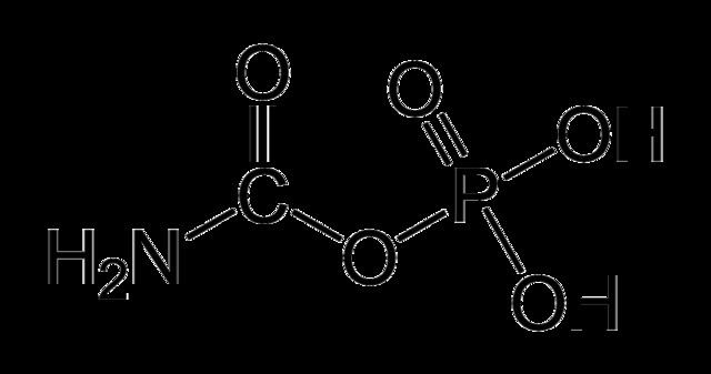 Carbamoyl phosphate FileCarbamoylphosphatepng Wikimedia Commons