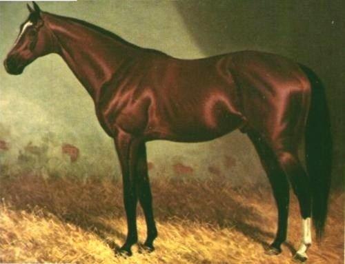 Carbine (horse) httpsuploadwikimediaorgwikipediacommons77