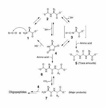 Carbonyl sulfide The Scripps Research Institute Scientfic Report 2006