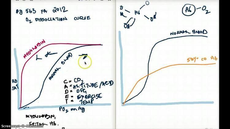 Carboxyhemoglobin 563 FA 12 OXYGEN DISSOCIATION CURVE AND CARBOXYHEMOGLOBIN YouTube