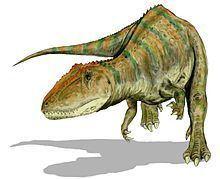 Carcharodontosaurus httpsuploadwikimediaorgwikipediacommonsthu
