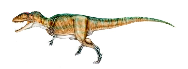 Carcharodontosaurus Carcharodontosaurus Facts and Pictures