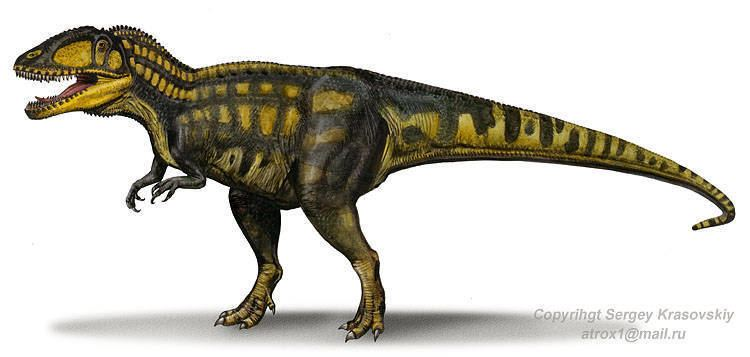 Carcharodontosaurus Carcharodontosaurus