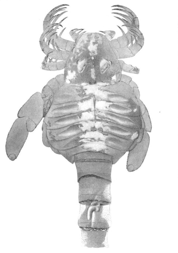 Carcinosoma