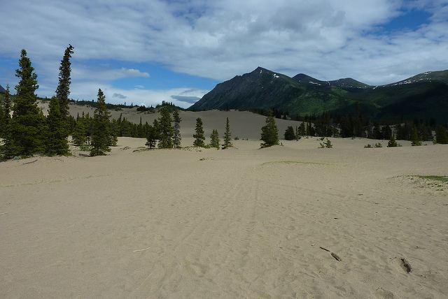 Carcross Desert The Carcross Desert The Basement Geographer