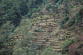 Cardamom Hills httpsuploadwikimediaorgwikipediacommonsthu