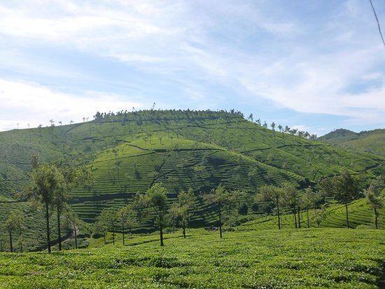 Cardamom Hills Cardamom Hills Kerala Top Tips Before You Go TripAdvisor
