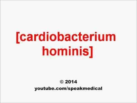 Cardiobacterium hominis Pronounce Cardiobacterium hominis SpeakMedical YouTube